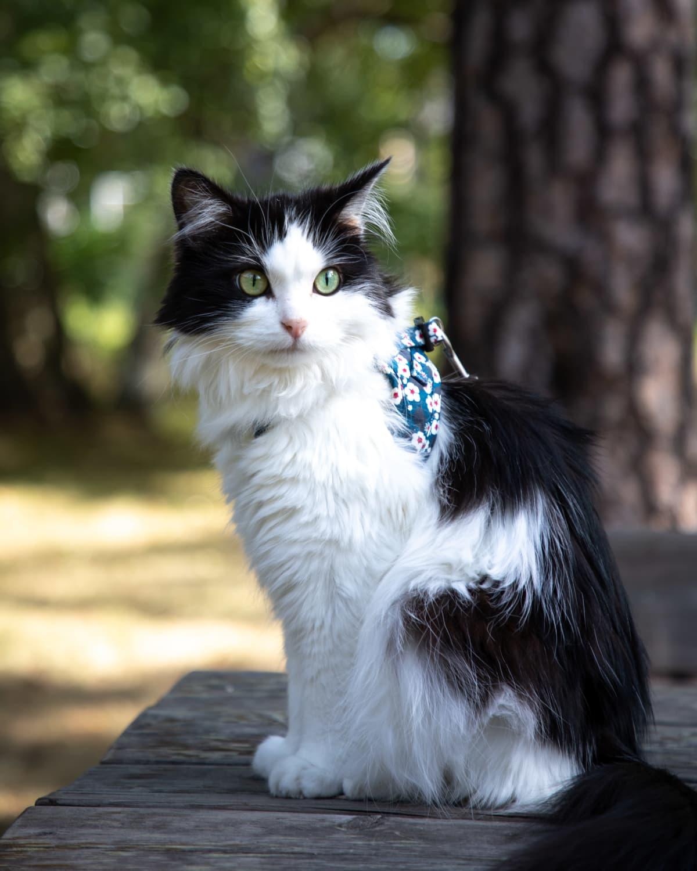 Mauri-kissa istuu pöydällä puutarhassa.