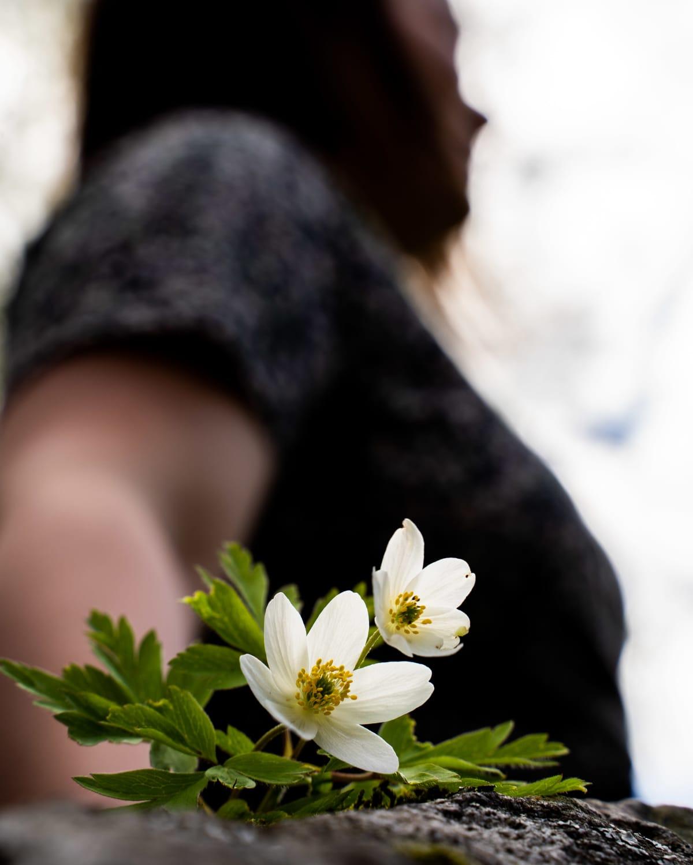 Kukka kivellä, taka-alalla nainen.
