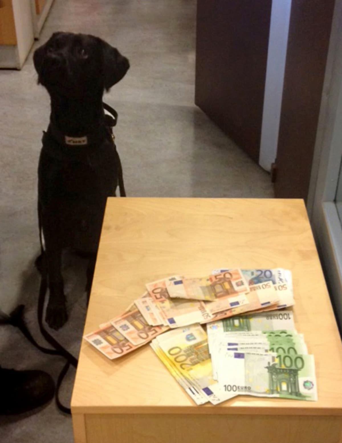 koira ja seteleitä pöydällä