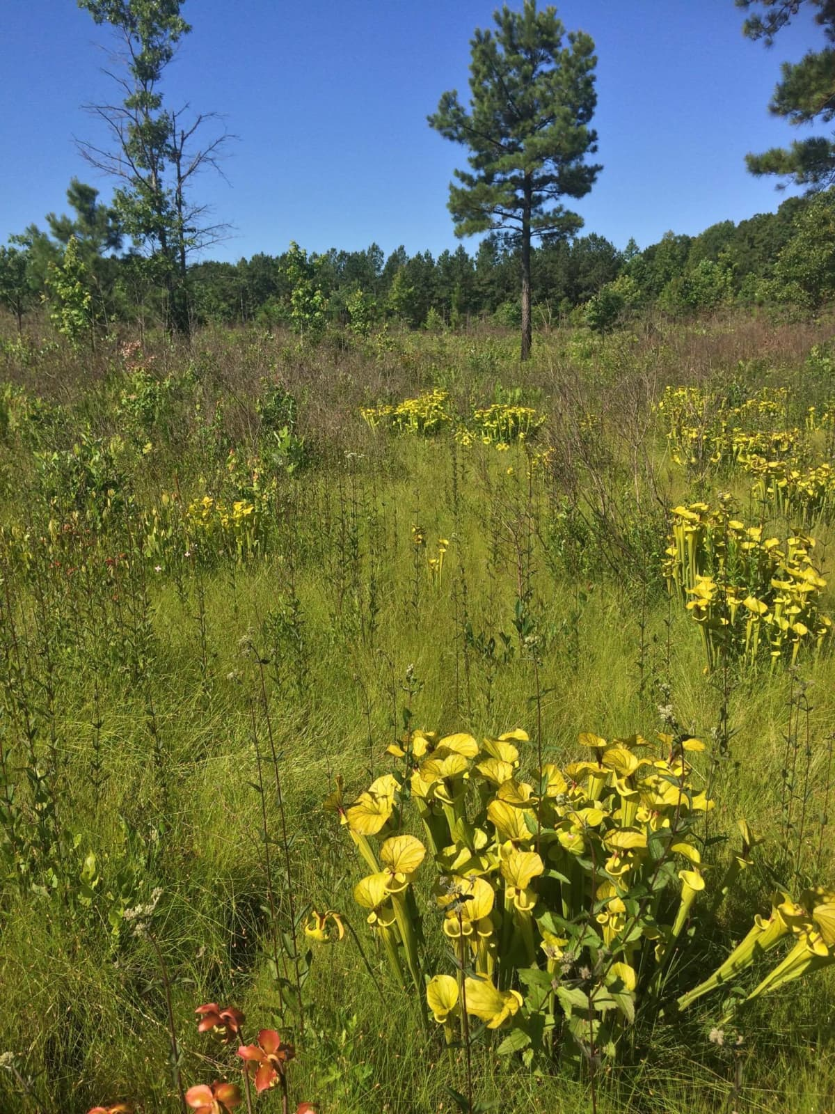 Keltatötterölehtiä luonnonsuojelualueella