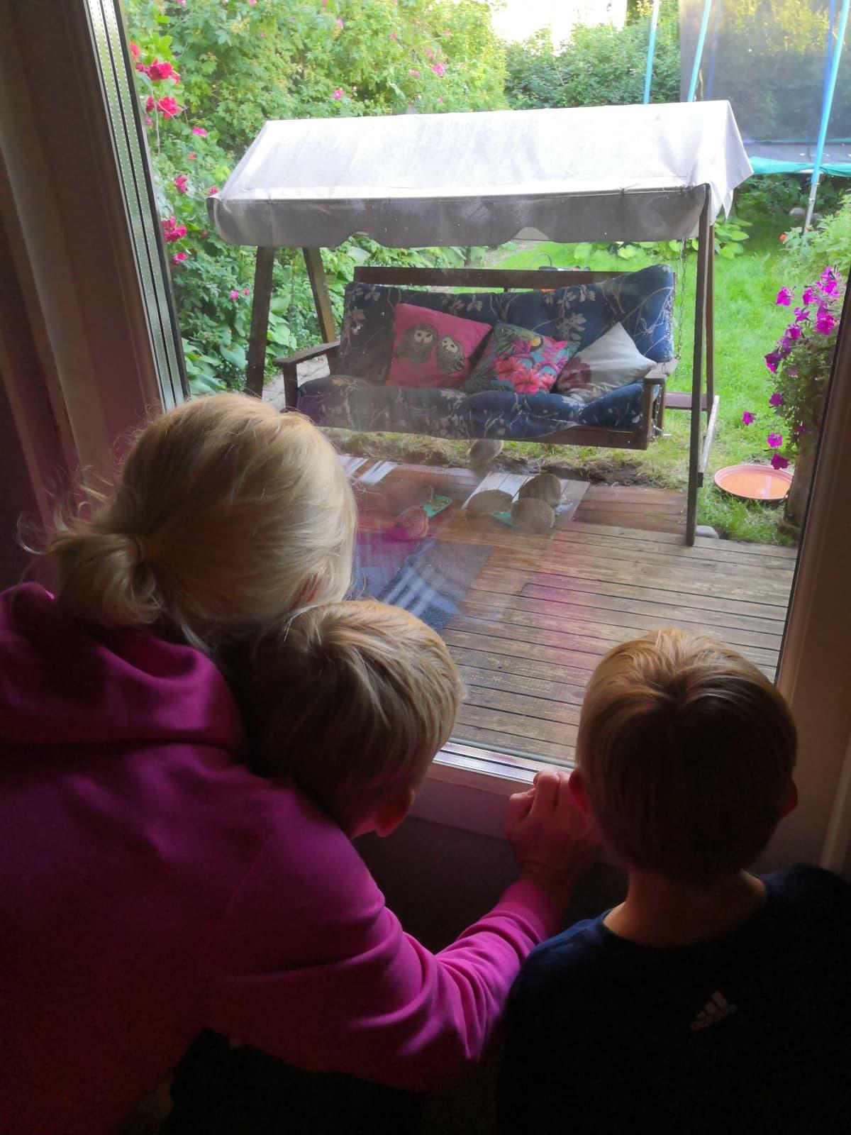 Lapset katselevat pihakeinun alla taapertavia siilejä.