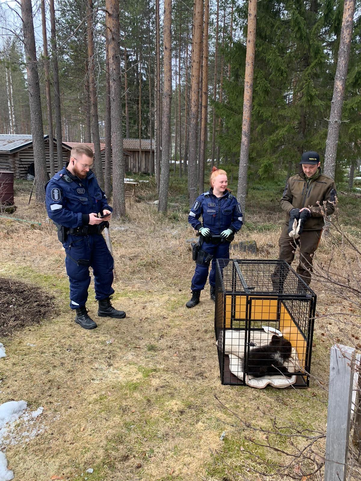 Orpo karhunpentu odottaa häkissä kuljetusta orpokotiin
