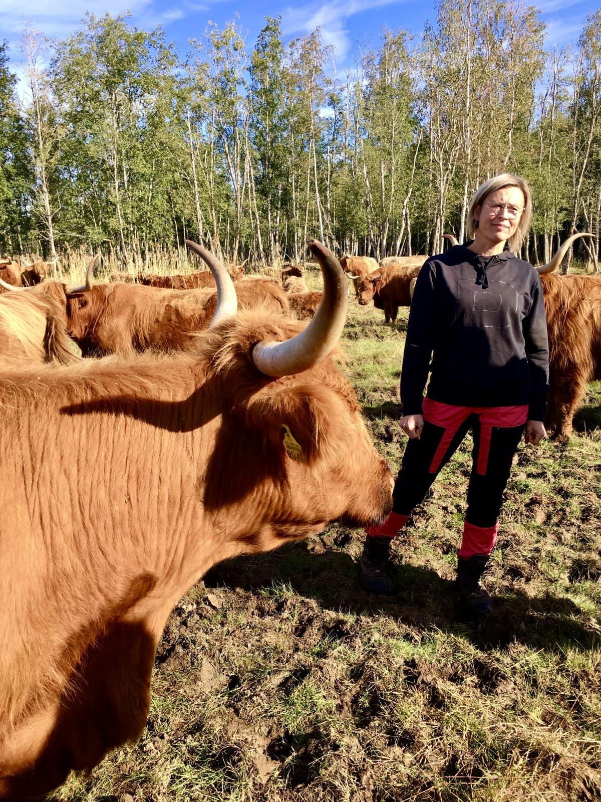 Marika Koski ylämaankarjan ympäröimänä