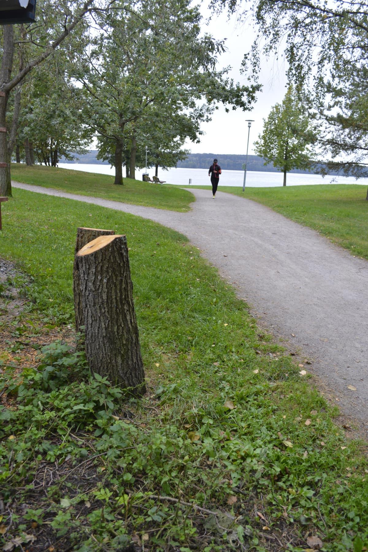 Puistossa tuhotut puut kaadettiin