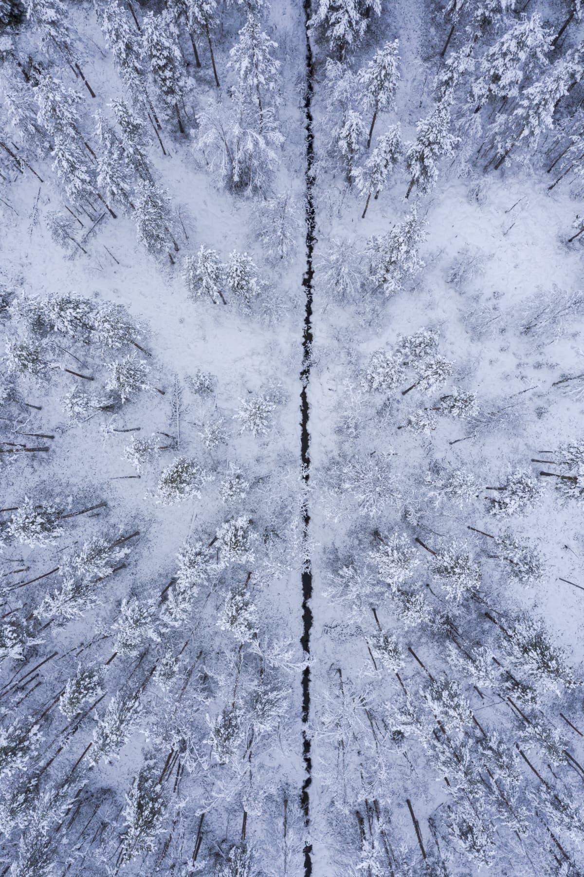 Suo-oja kulkee lumisen suometsän lävitse, kuva otettu suoraan ylhäältä.
