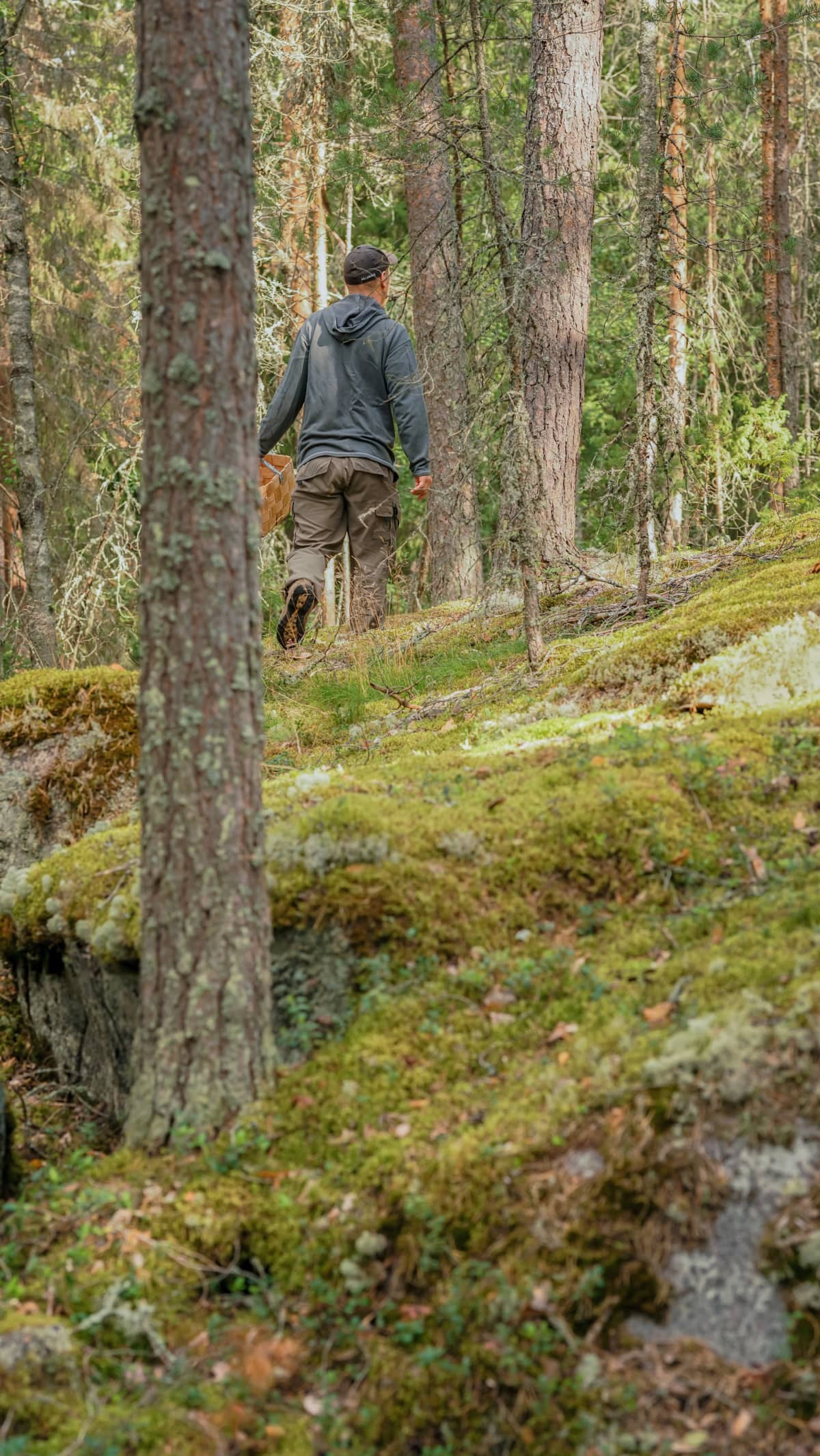 Panu Halme kävelee metsässä.