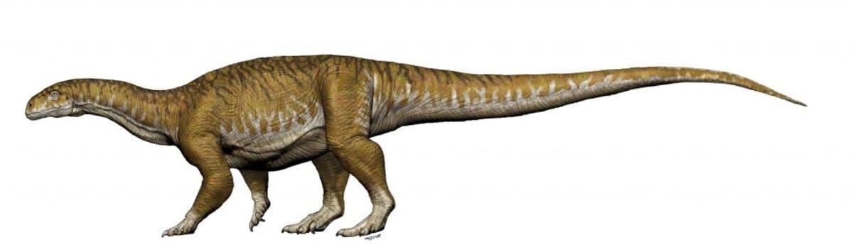 Piirroskuva neljällä jalalla kävelevästä pitkähäntäisestä ja melko pitkäkaulaisesta dinosauruksesta.