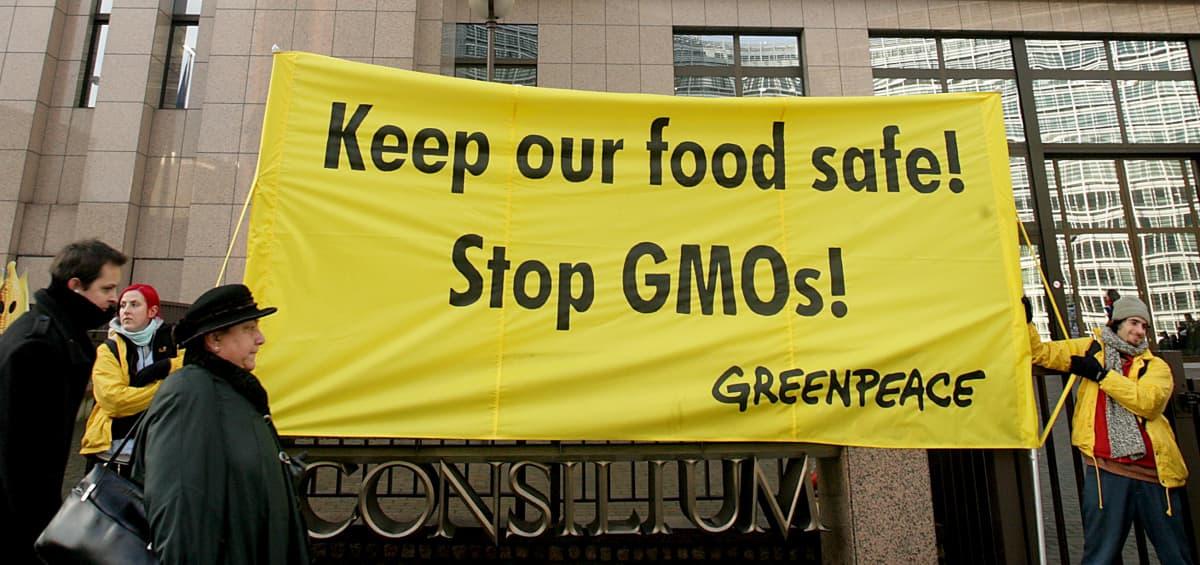 Greenpeacen aktivistit osoittivat mieltään GMO:ta vastaan vuonna 2008.