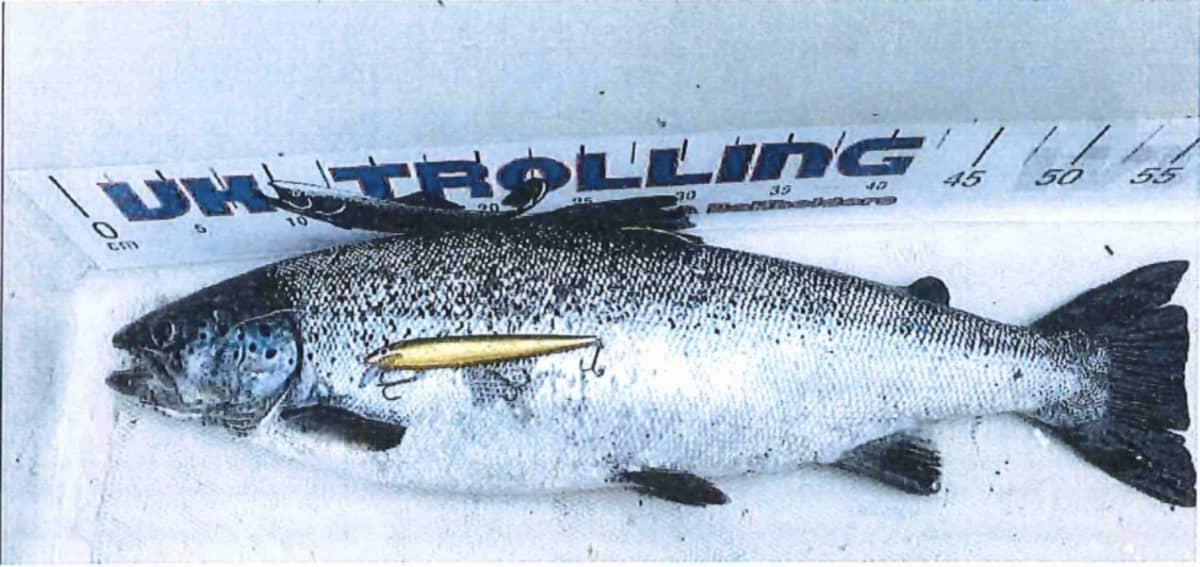 Kala ja vaappu veneen pohjalla