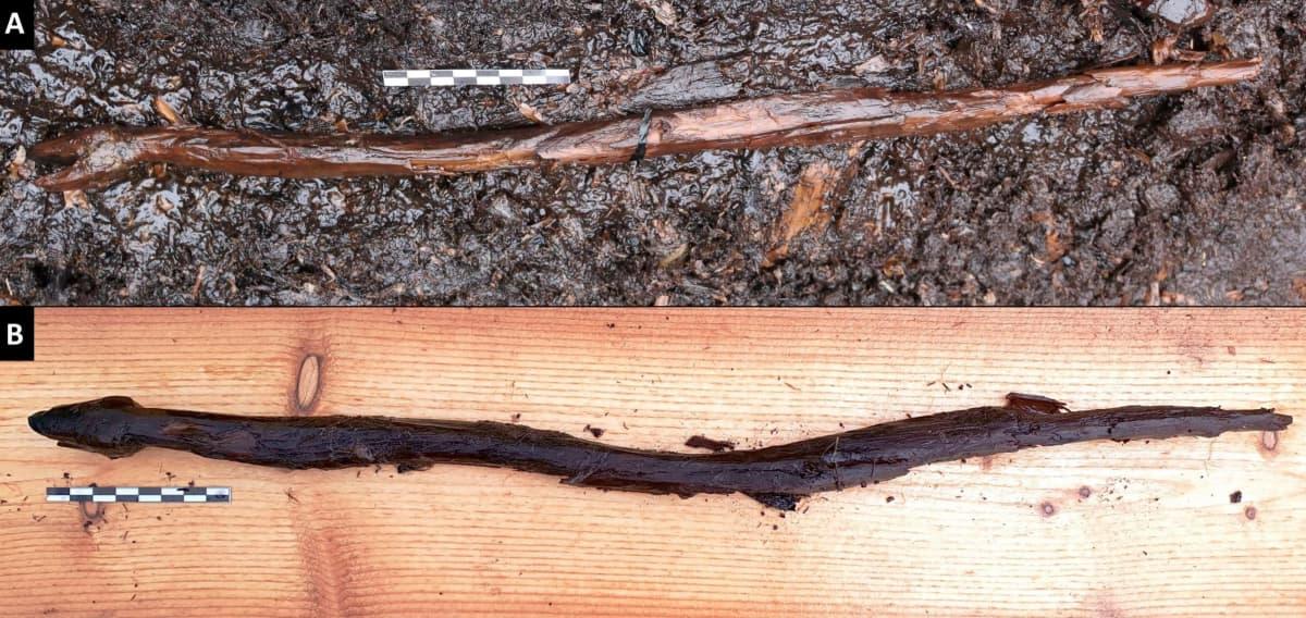 Käärmeveistos löytöpaikallaan (A) ja nostettuna ylhäältäpäin kuvattuna (B)
