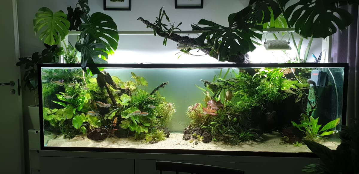 Akvaario, josta kasvaa ulos suuria viherkasveja