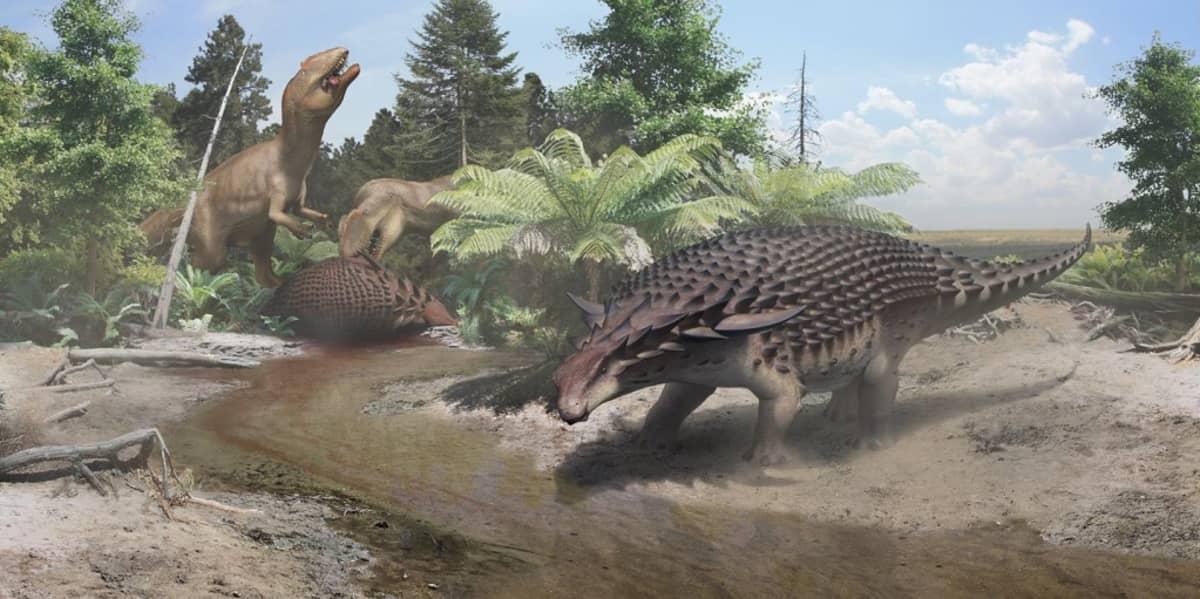 Piirroskuva, jossa kaksi lihansyöjäsaurusta raatelee tappamaansa Borealopelta markmitchelli -saurusta. Edessä toinen joenuoman ääressä.