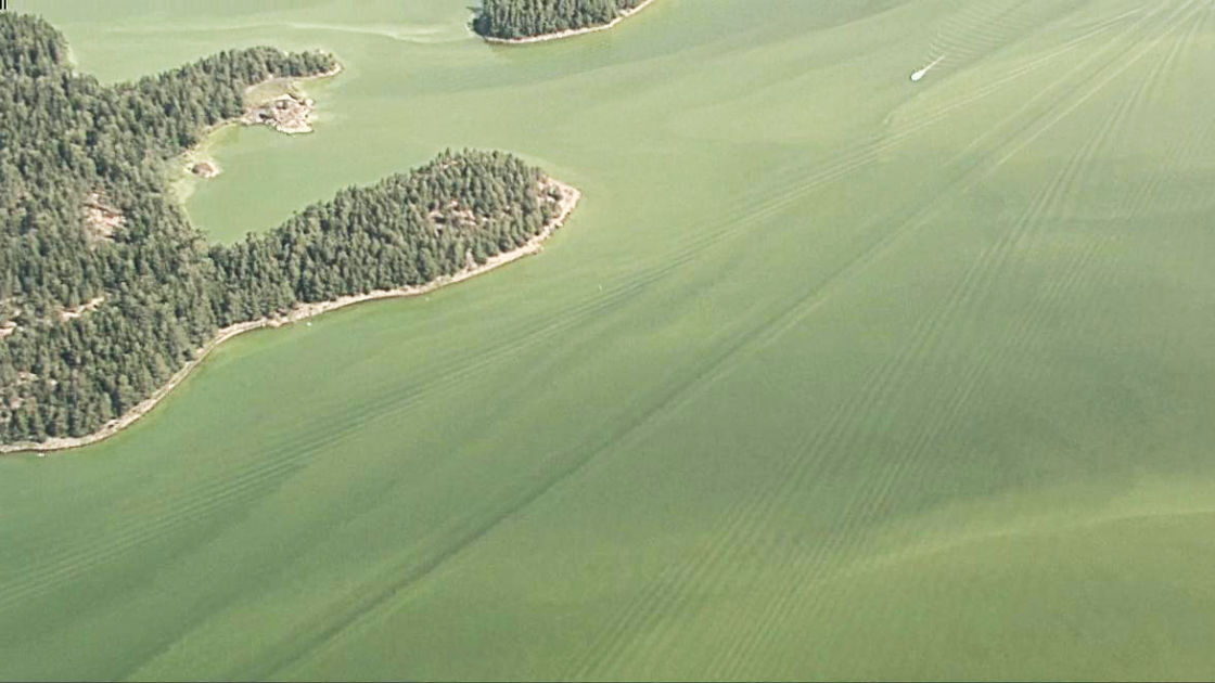 Lentokoneesta kuvattu video näyttää, kuinka vihertävät sinilevämassat ovat vallanneet Suomenlahden: