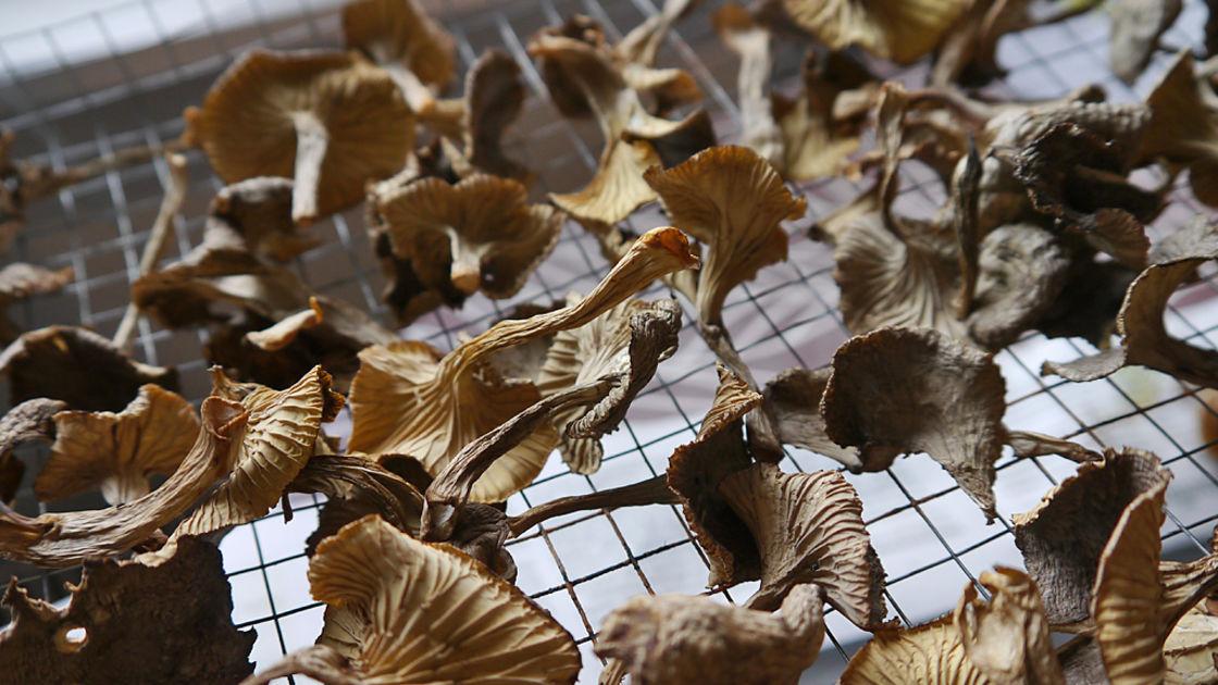 Suomalaiset Sienet