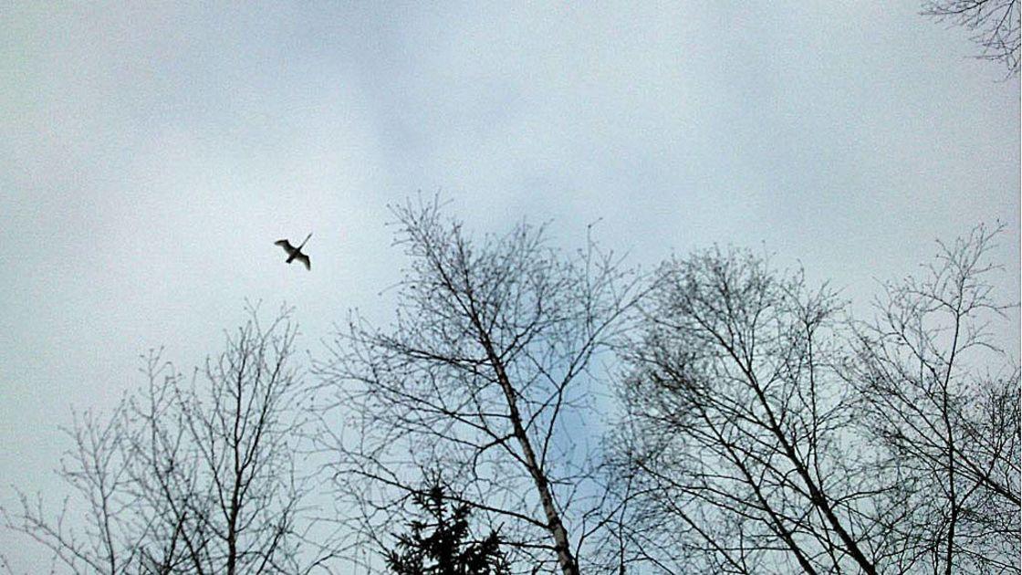 Lintujen Muutto