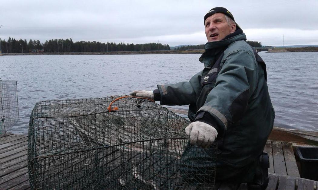 Kemijärvi on puhdistunut tehtaan jäljiltä - kalaa kysytään kaupan tiskillä | Yle Uutiset | yle.fi
