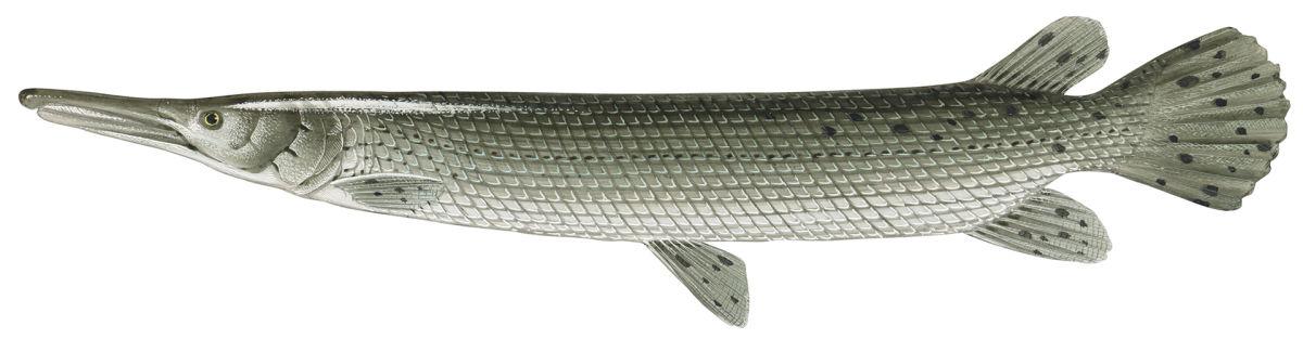 Alligaattoriluuhauki