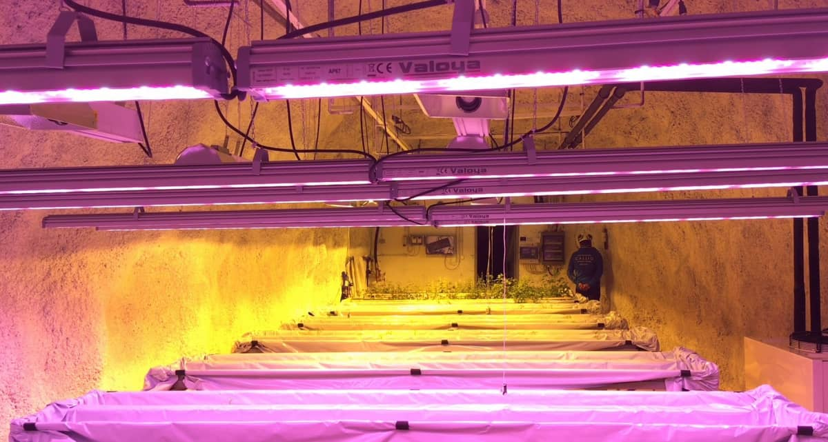 Kasvihuoneen led- ja suurpainenatriumvalaisimia