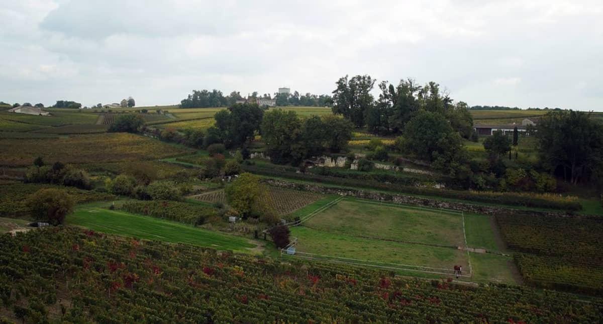 Maisemakuva viiniviljelmästä.