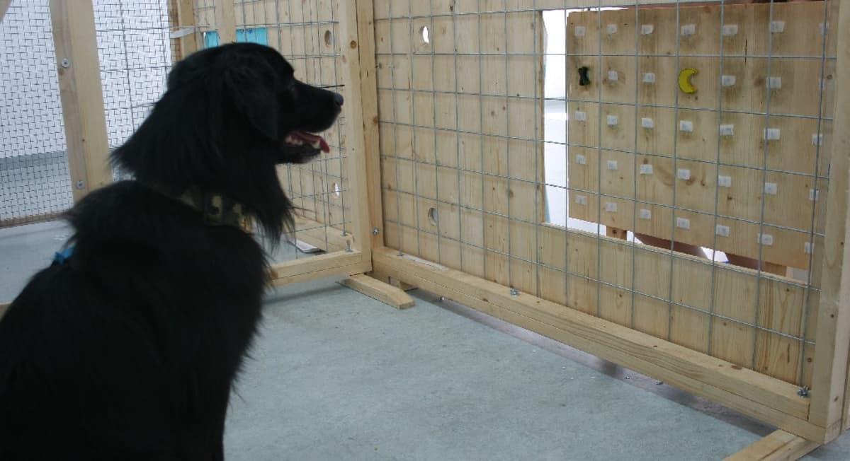 Koira katselee taulu, jonka yhdessä ruudussa on kuunsirpin kuva.