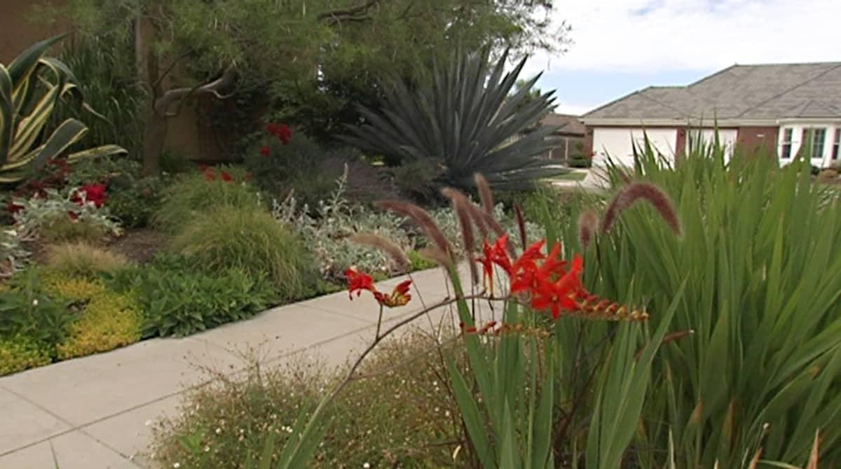Kaktuspuutarha