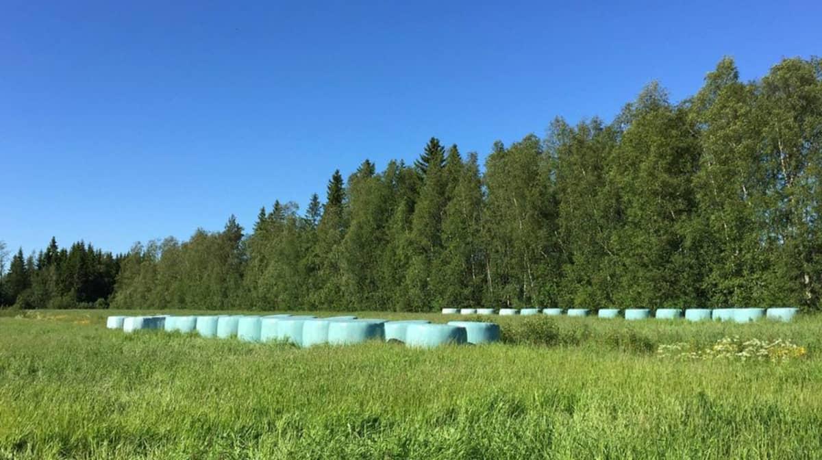 Kuvassa vihreitä rehupaaleja pellonreunassa