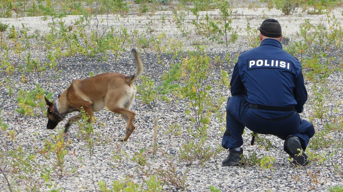 Poliisikoirapartio etsintätehtävissä.