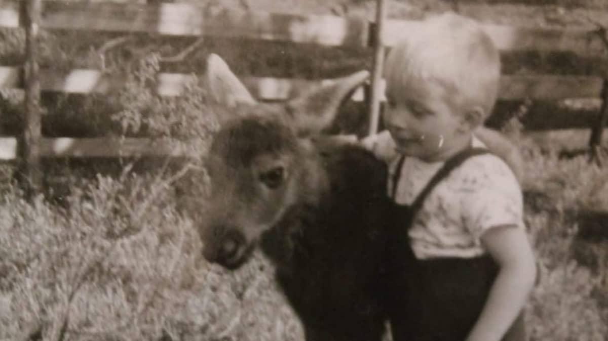 Pentti Alatalo lemmikkihirven kanssa 1960-luvun lopulla.