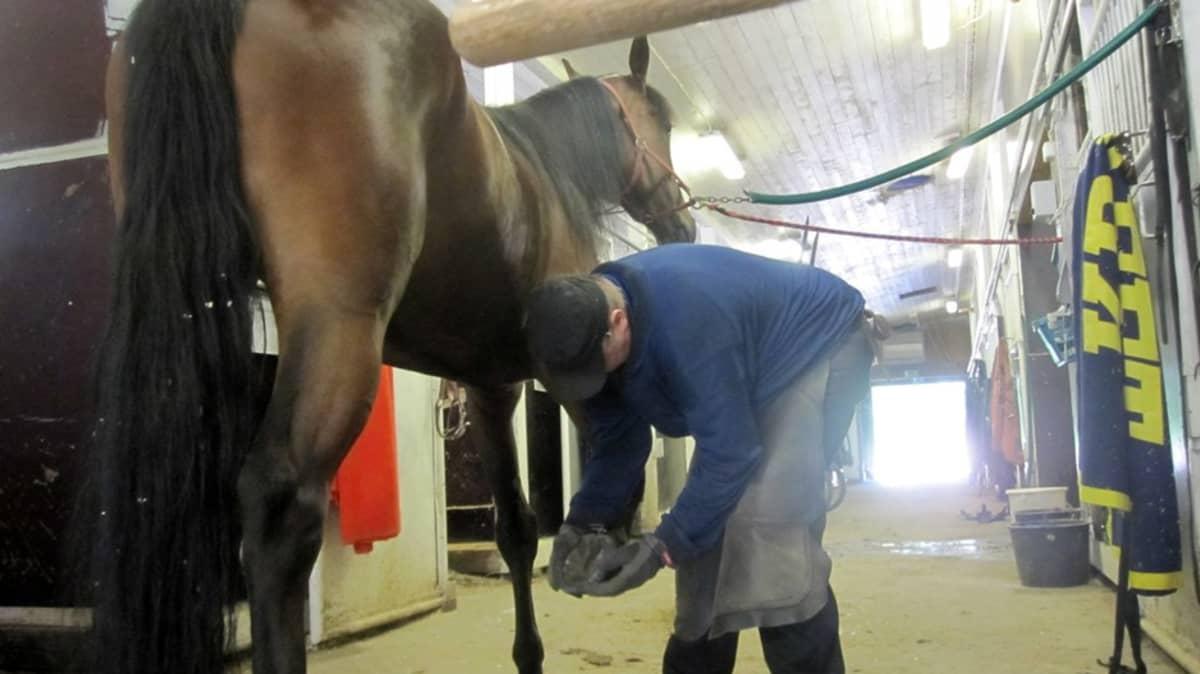 Kengitysseppä tutkii hevosen kavioita ja vanhoja kenkiä