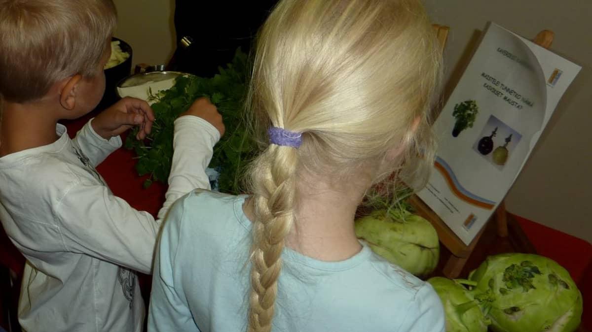Mikkelin Kalevankankaan oppilaat tutustuvat kasviksiin.