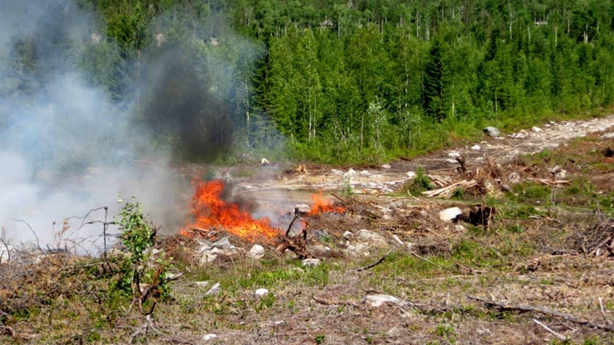 Metsän kulotus