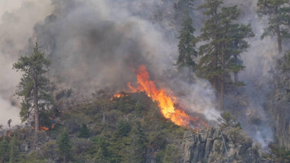 Maastopalo polttaa puita vuorenrinteessä.
