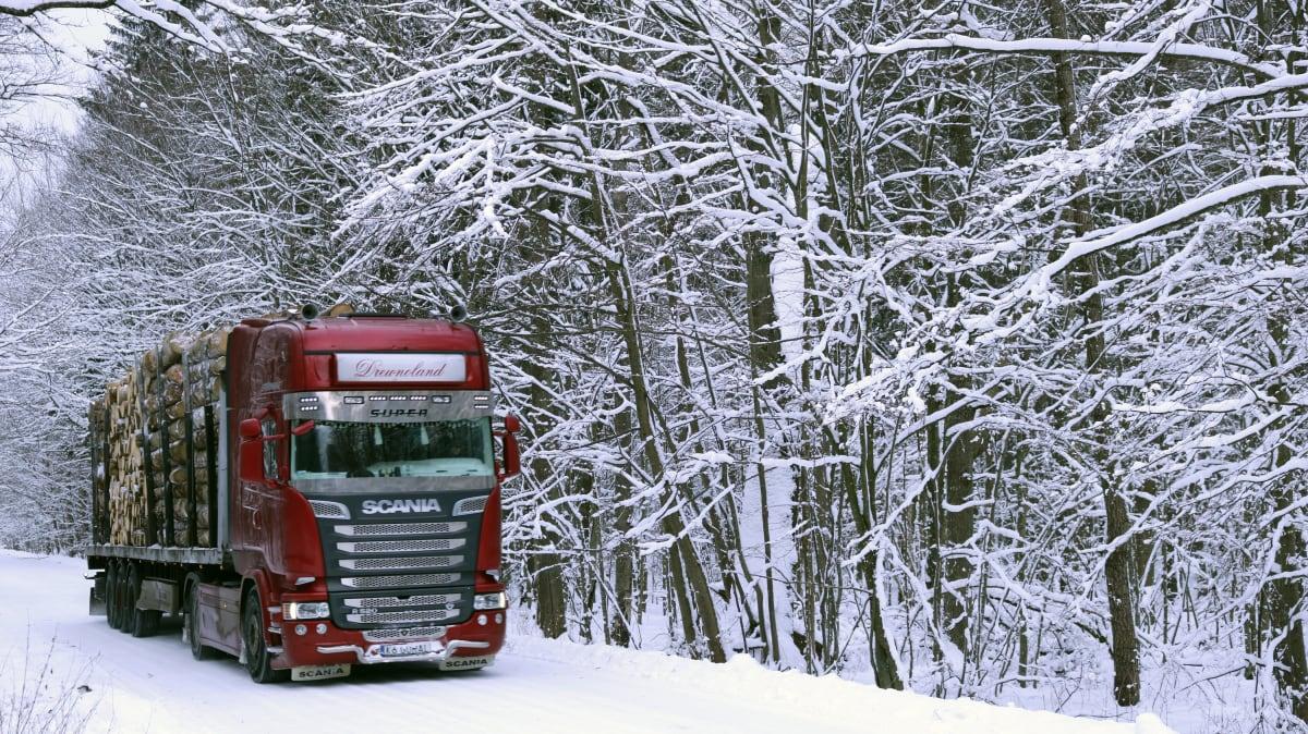 Tukkirekka kuljetti Białowieżasta kaadettua puuta pois metsästä. Puuta käytetään sahatavarana ja huonekaluteollisuudessa.