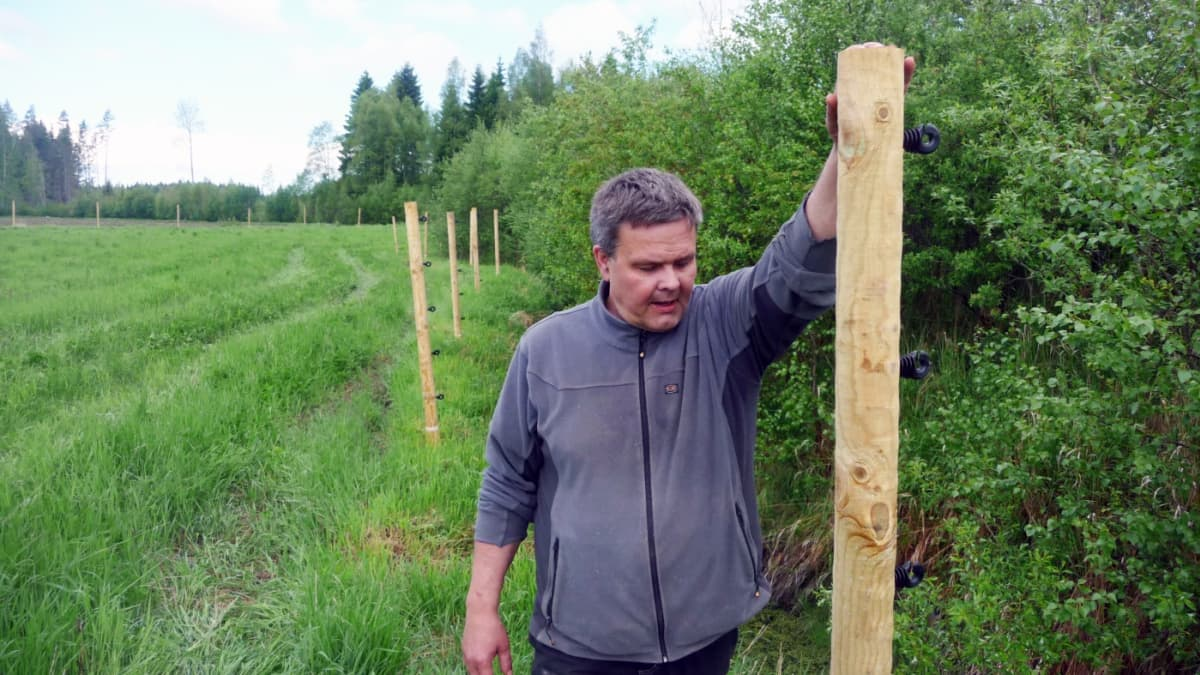 Anders Norrback rakentaa aitaa