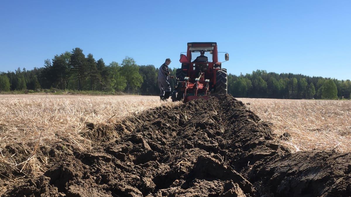Traktori kyntää pellolla Virolahdella
