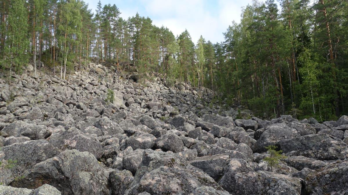 Kivilouhikkoa Jäppilän Kivikurussa.
