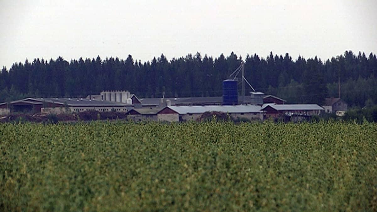 Maatila Hauholla