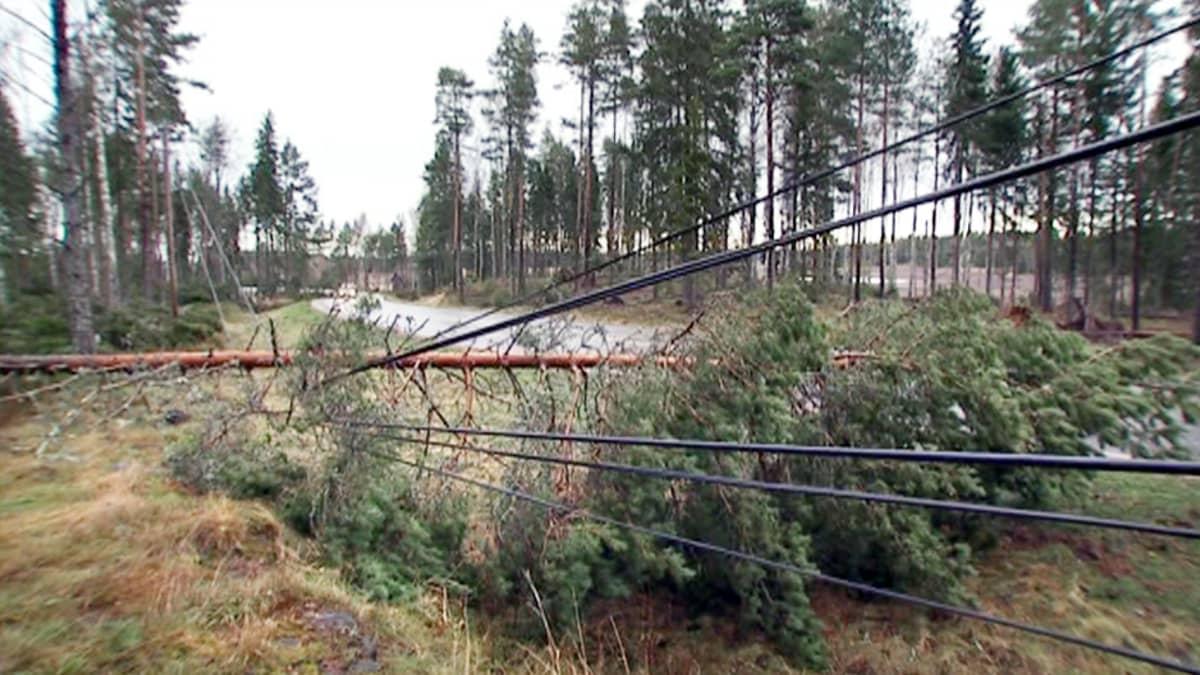 Sähkölinjojen päälle kaatuneita puita.