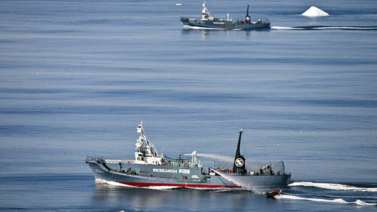 Japanilaisia valanpyyntialuksia ja valaansuojelijoiden kumivene.