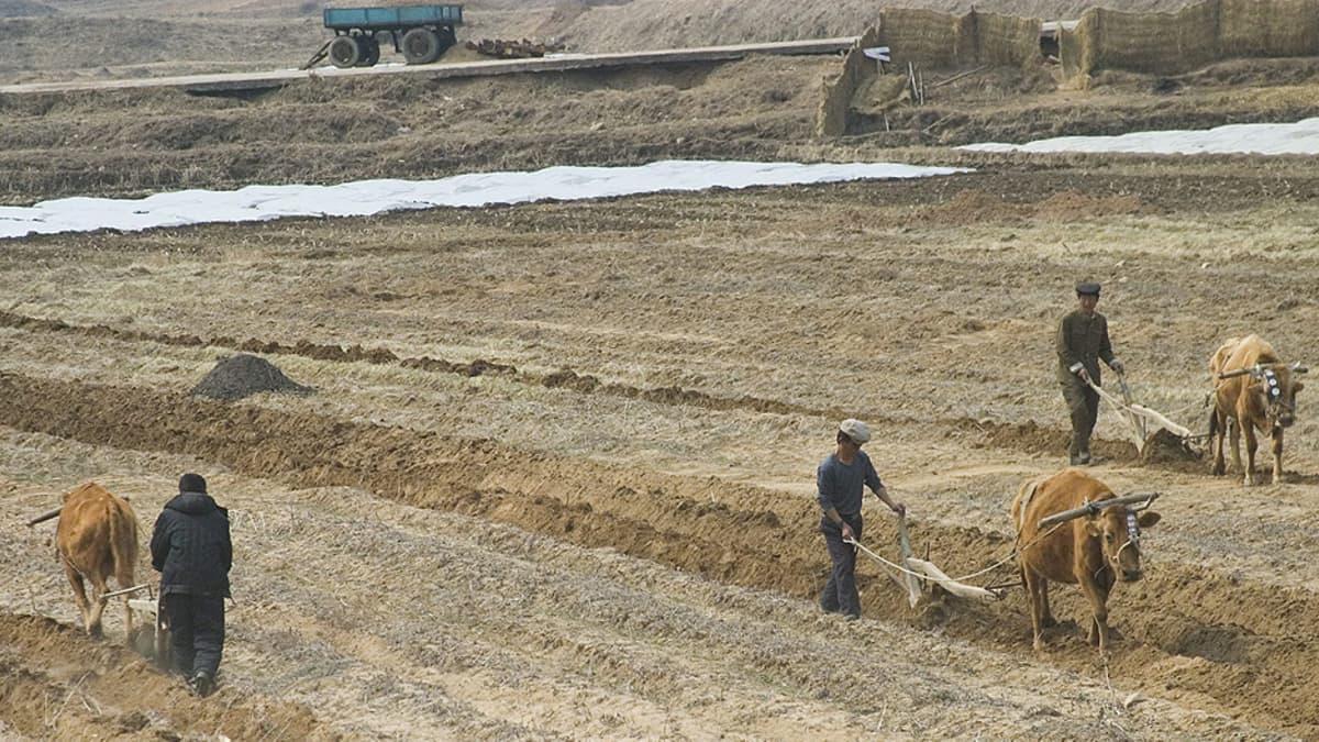 Maanviljelijät kyntävät peltoa.