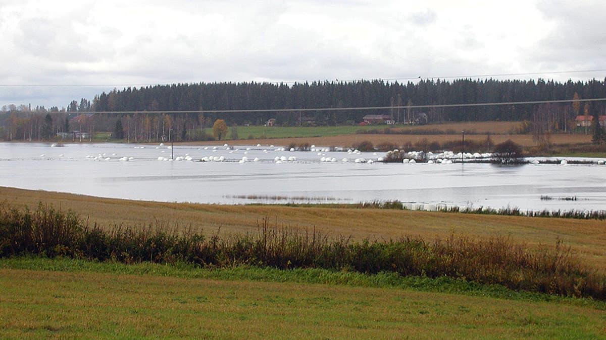 Syyssateiden nostattamaa tulvavettä pelloilla.