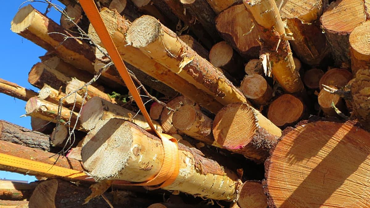 Puukuorma tukkirekan kyydissä.
