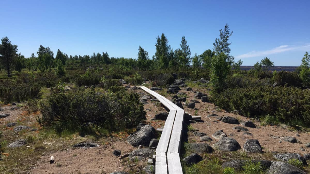 Pitkospuut Perämeren kansallispuistossa