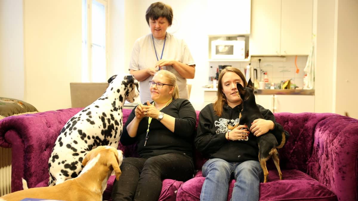 Kaksi koiraa sohvalla yhdessä koirahoitajien Johannan ja Annan kanssa. Taustalla tilannetta seuraa Raisa Kähkönen.