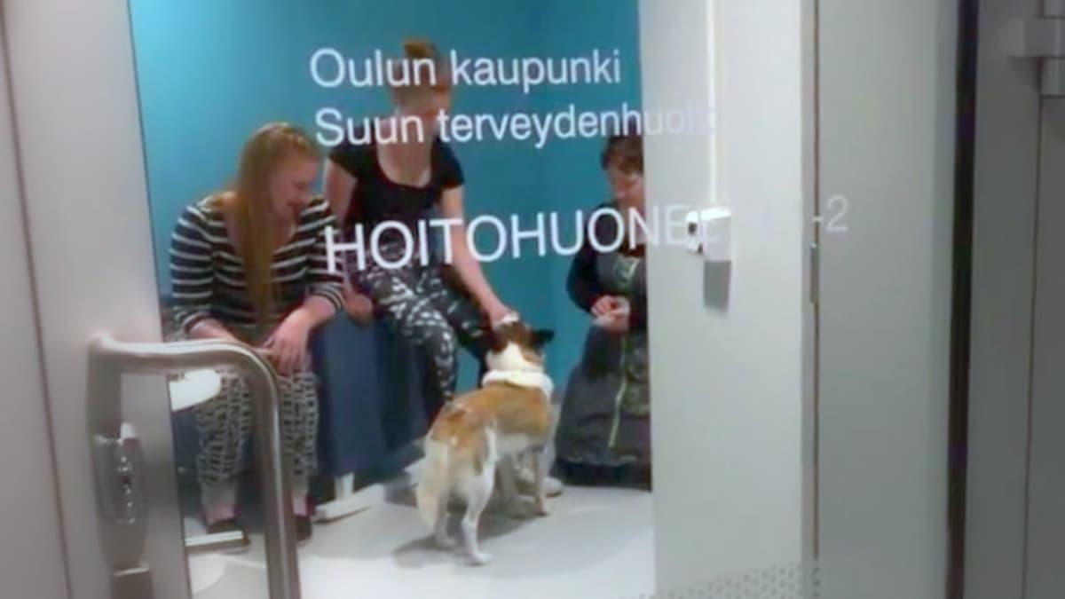 Mimmi-koira auttaa hammaslääkäripelkoisia ihmisiä.