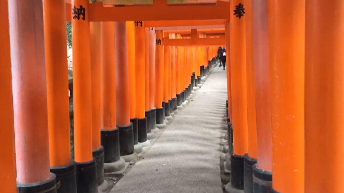 oranssiset pylväät muodostavat käytävän