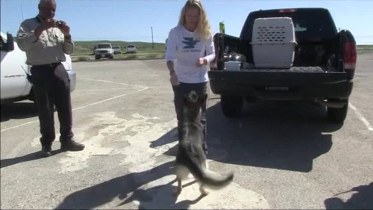 Uutisvideot: Merestä pelastautunut Luna-koira nauttii huomiosta San Clementellä