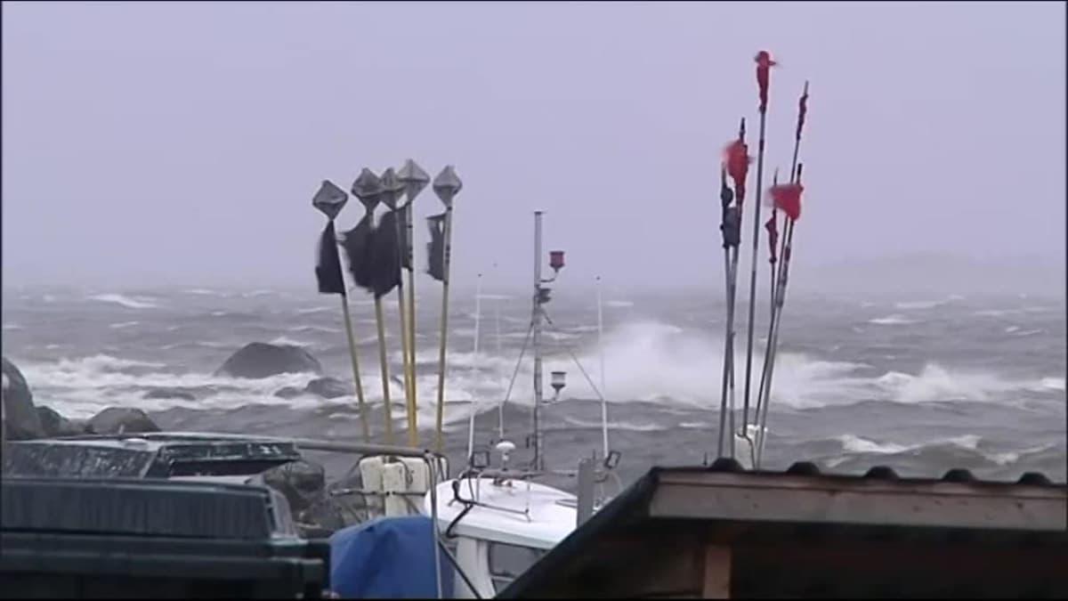 """Uutisvideot: Tuuli tuivertaa Pohjanmaalla – """"syksyn merkkejä keskellä kesää"""""""