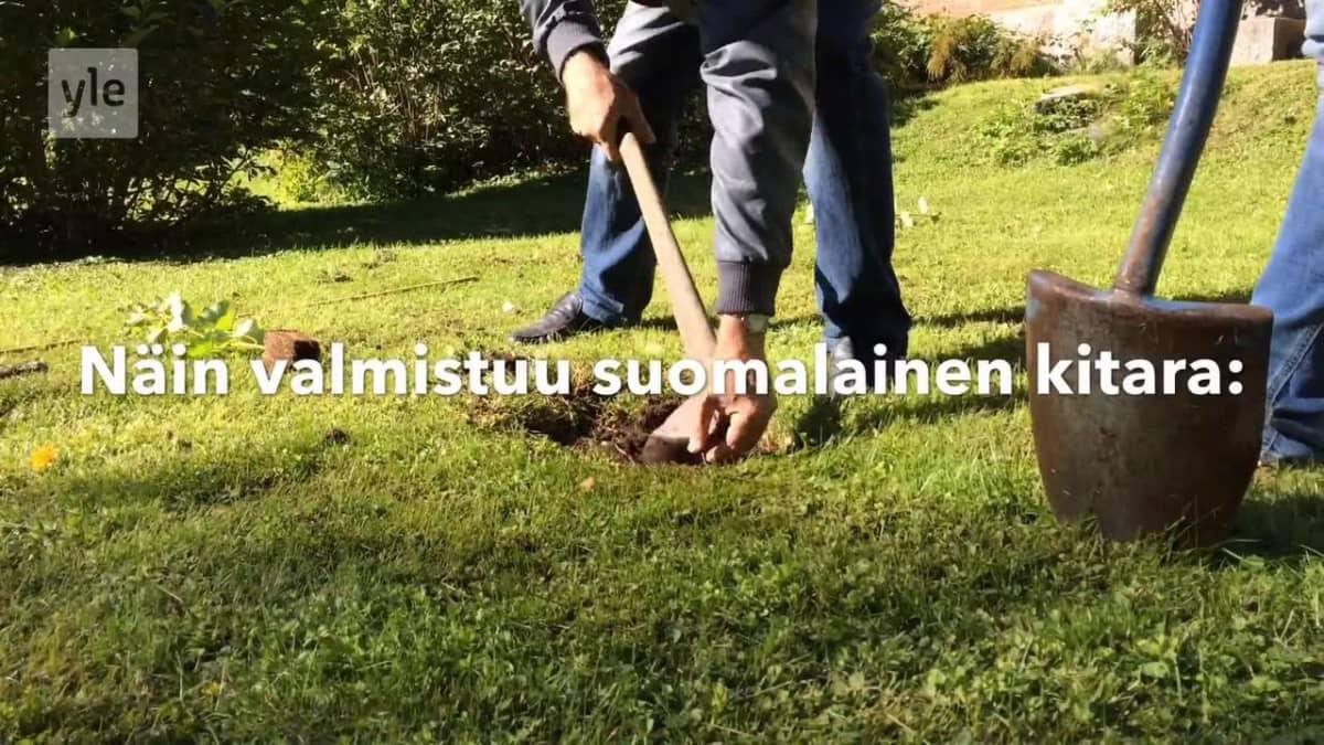 Yle Uutiset Häme: Loimukoivusta kitaraksi