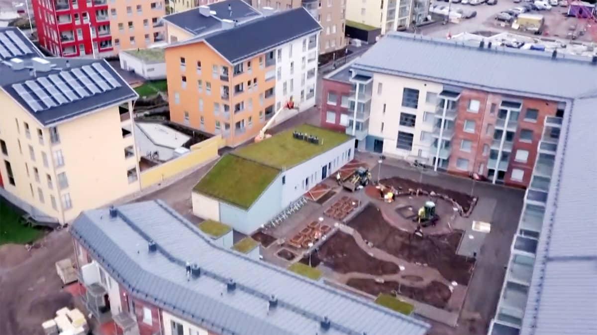 Helsingin Kuninkaantammeen viherkattoja on rakennettu autokatoksiin ja mataliin piharakennuksiin.